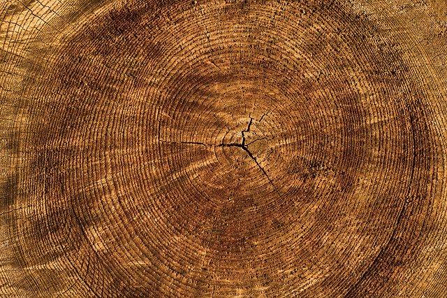 letokruhy na stromu